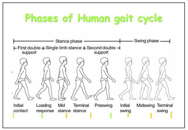 gait analysis gait cycle