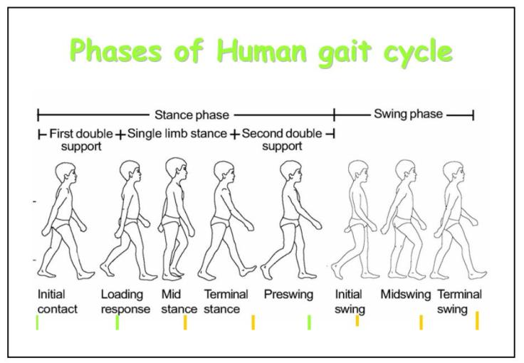 gait analysis gait cycle